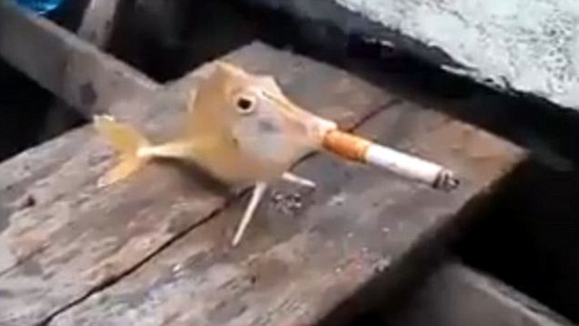 Sick animal cruelty poor fish made to smoke a cigarette for Best fish to smoke