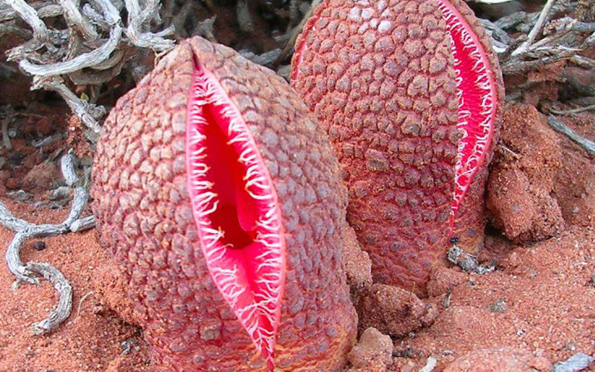 Would you put these 10 creepy plants in your garden? | DailyPedia
