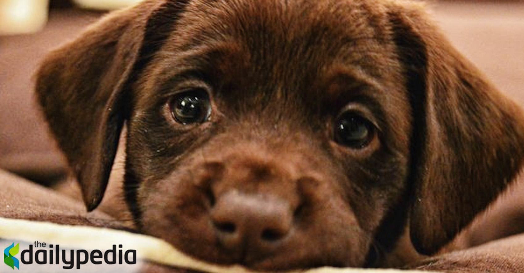 Cute Puppy Dog Eye Gifs