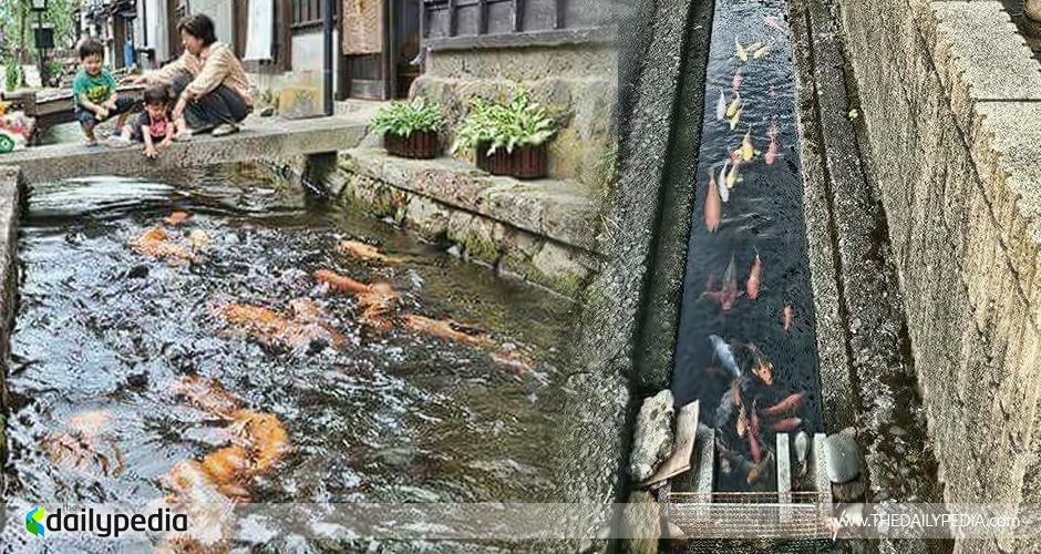 Canals in Japan Are So Clean, They Have Koi Fish In It ...